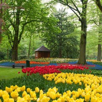 Holandsko - tulipány a Amsterdam