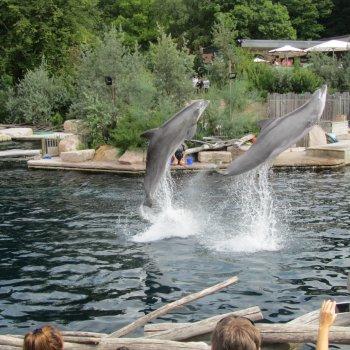 Delfíní laguna a ZOO Norimberk